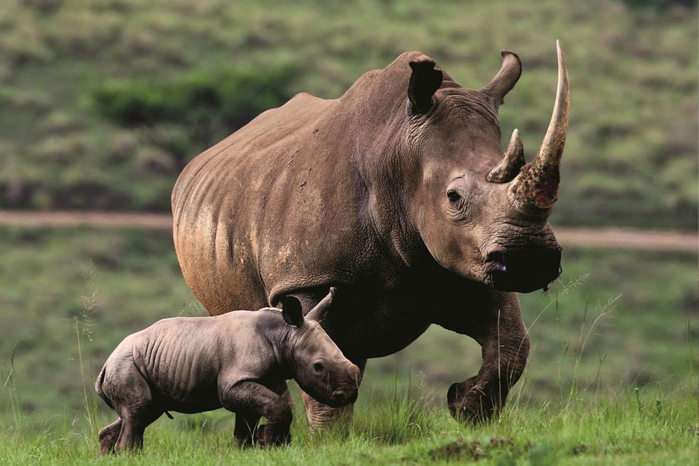 Alu-Cab contributes R50 000 towards Anti-Poaching.